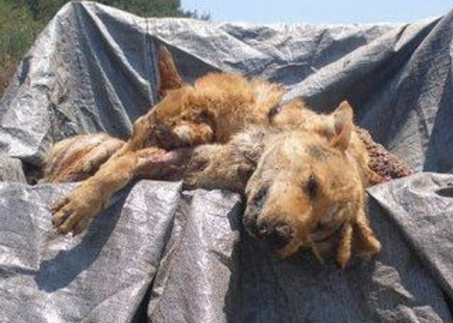 Pressure local Authorities in Crete (Greece) to FINALLY take action against on-going animal crimes!