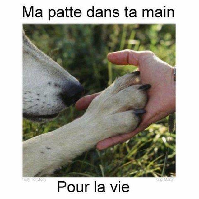 LOI  EN  FRANCE POUR LA PROTECTION DES ANIMAUX, peine de prison demandée pour tout acte de cruauté