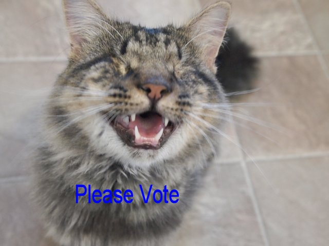 Pledge: Please Pledge to vote Every day to Help the Blind Cats!