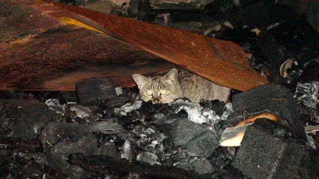 Justice for carer Tereza and the 120 cats and dogs burnt to death 25.10.2012 in Cluj,Romania