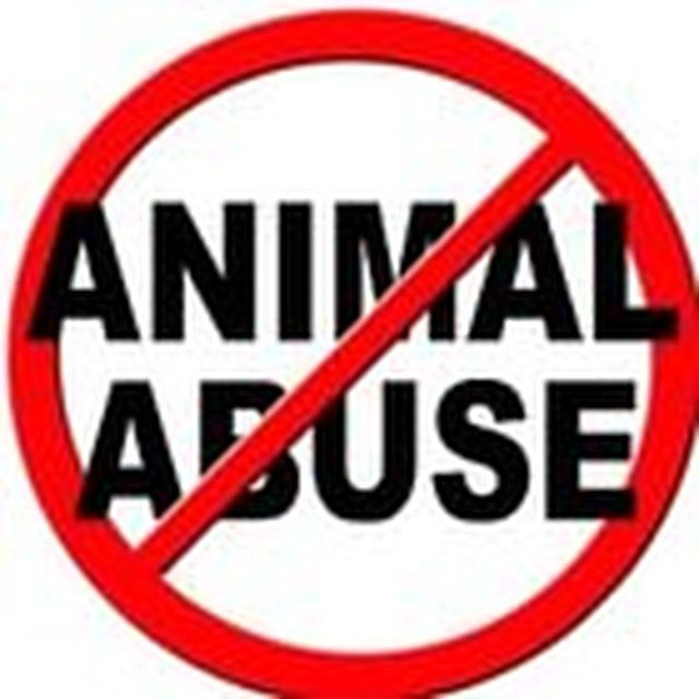 PLEDGE TO REPORT ALL ANIMAL CRUELTY YOU SEE TO THE POLICE AND HUMANE