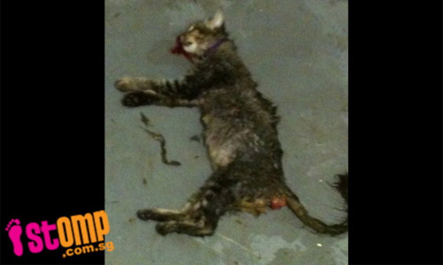 ask Singapore officials to have animal welfare police