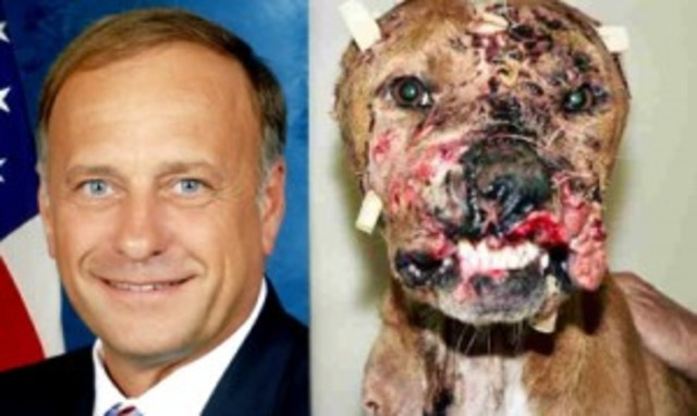 STOP STEVE KING from Iowa From supporting DOG FIGHTING