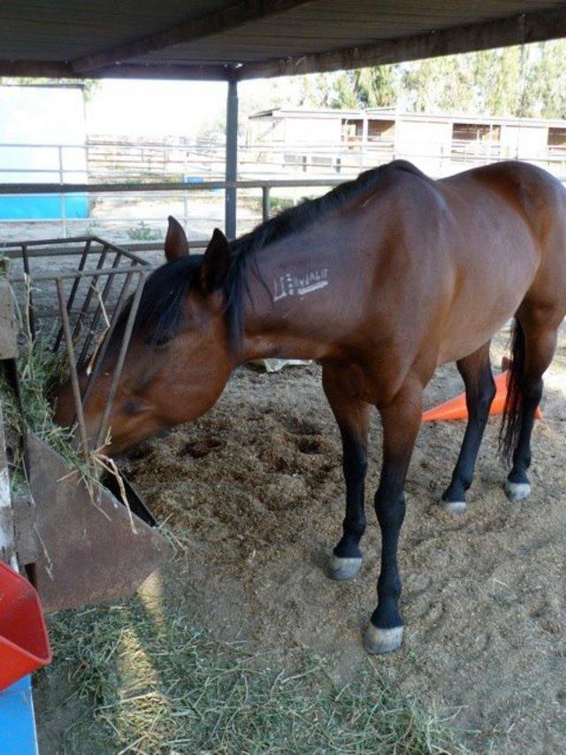 Help Horses In Need
