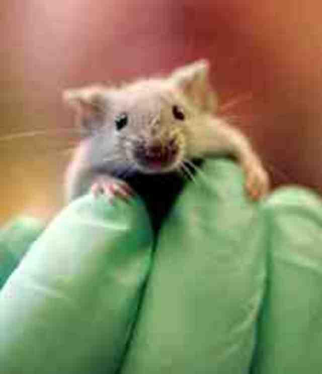 Animal Testing Prevention