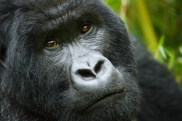 RAINFOREST ALERT! End Industrial Logging of Congo's Old-Growth Rainforests