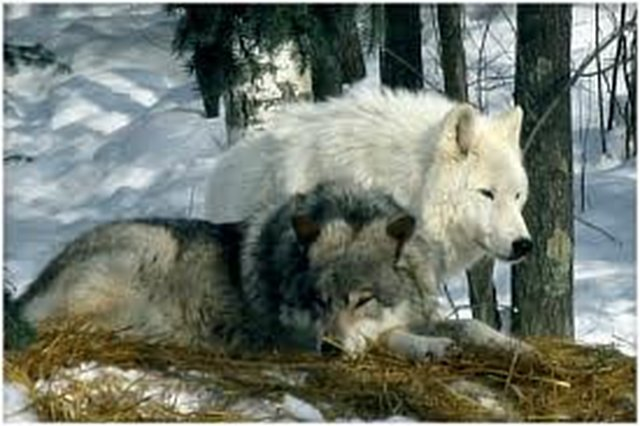 Wildlife Management Change http://www.avaaz.org/en/petition/Now!!!