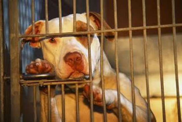 Stop the Illegal Round up of Pittbulls in Missouri!