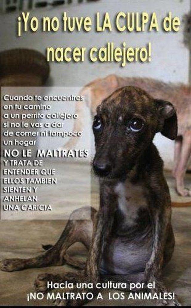 Por una CLÍNICA VETERINARIA que atienda GRATIS a los animales de la calle las 24 hs. en TUCUMÁN