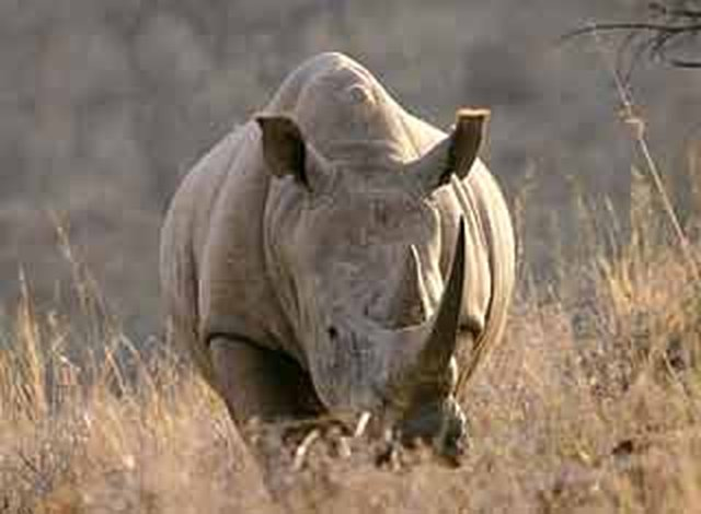 Ban rhino hunting in South Africa