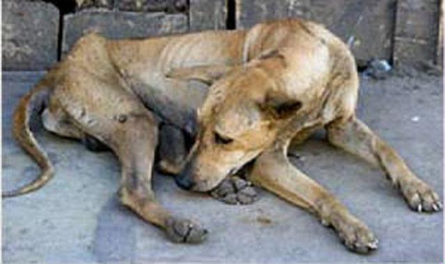 Help Relieve Animals from Cruelty!