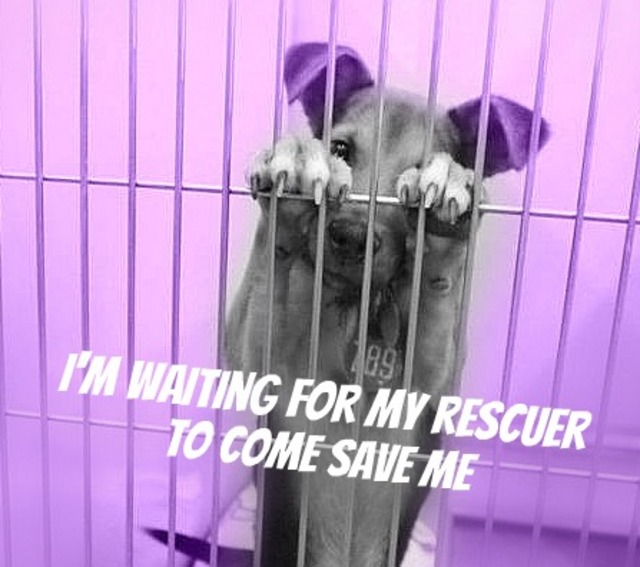The change starts with you so will you take the pledge and help a animal in need this week?