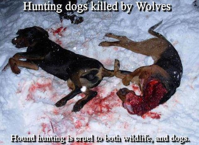 stop Wisconsin wolf hunt - Oct. 15th