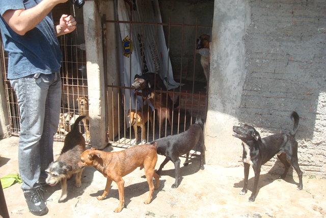 Help Dog Shelter in Brazil