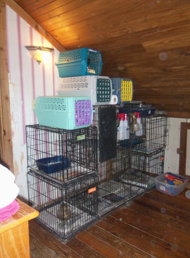 Help build FORTRESS FOR FELINES a NO Kill shelter for Frisky Felines Foundation