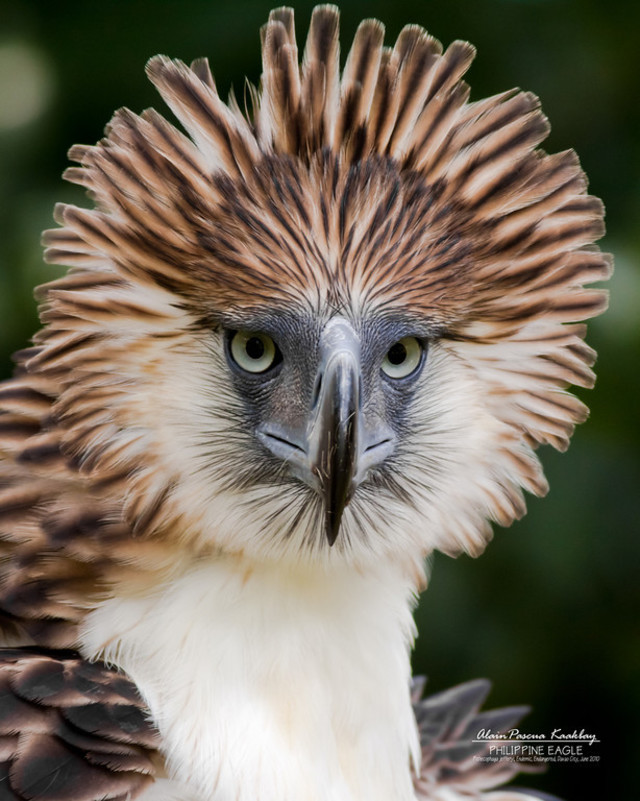 fundraise for the Philippine Eagle Foundation