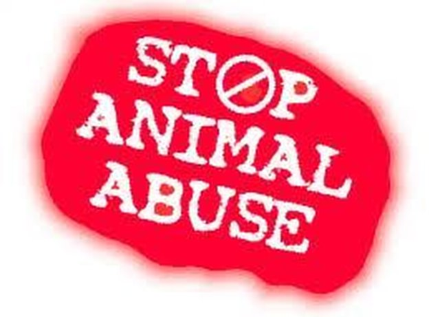 end horse slaughter, abuse and neglect