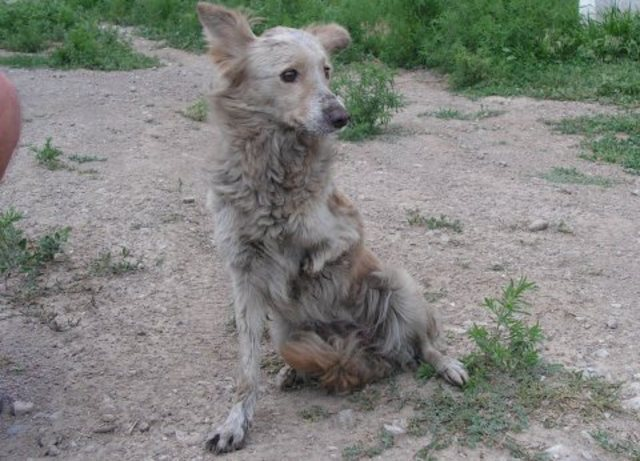 stop the abuse of stray animals in Romania