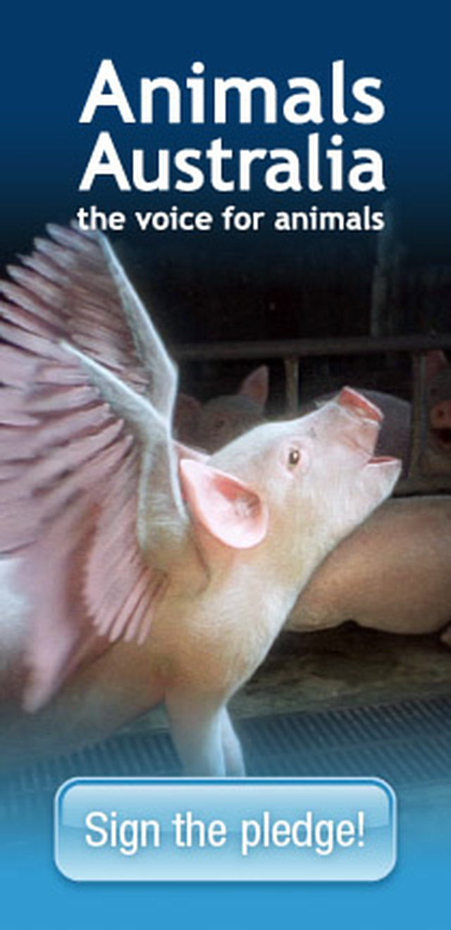 IMAGINE a World without Factory farming - MAKE IT POSSIBLE..