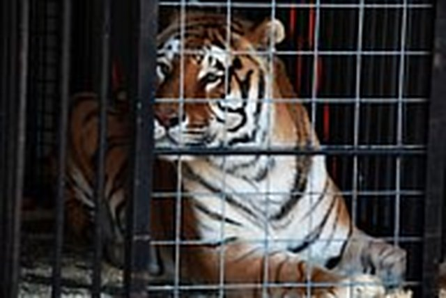 Tell the USDA to regulate - BIG CAT - ownership in the United States.
