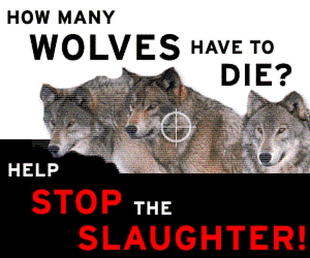 stop the extermination of Wolves