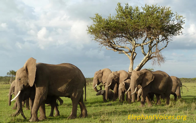 stop the ivory trade