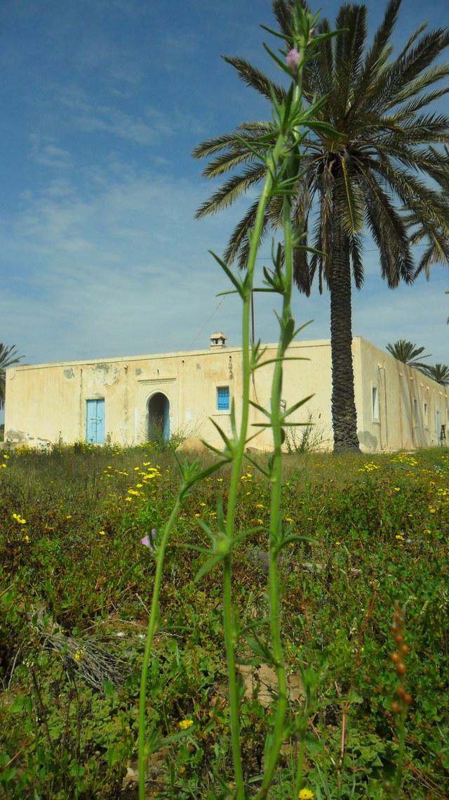 Pour l'inscription de Jerba par l'Unesco sur la Liste du Patrimoine Mondial