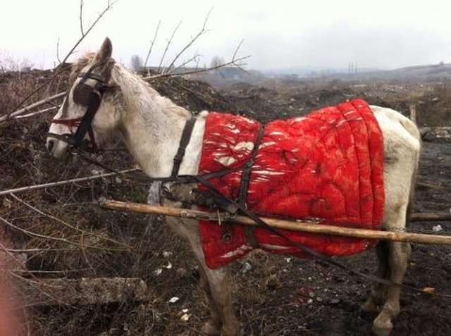 Please help this horse in Romania!