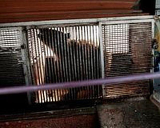 Free Katya The Russian Bear...