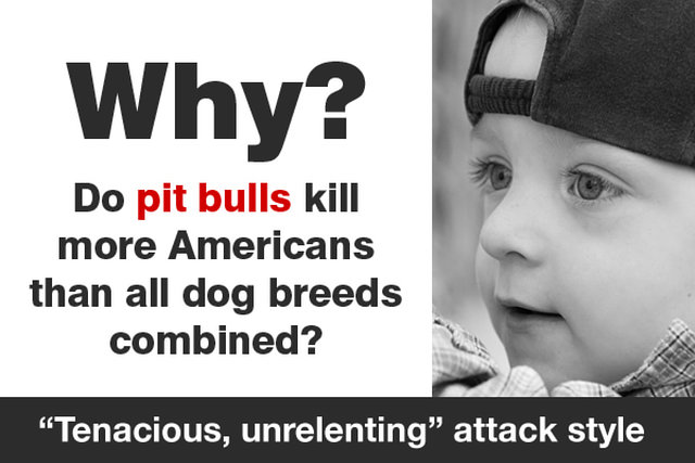 Fatal pit bull attacks sharply rise in 2013