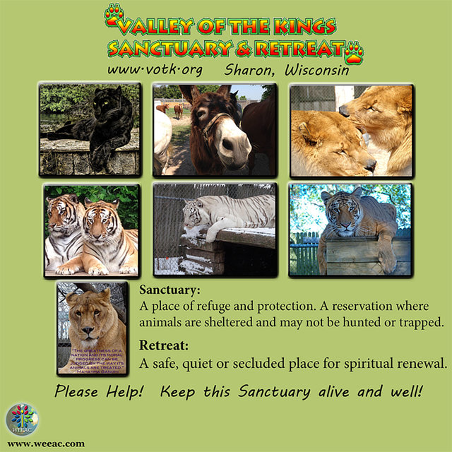 Please Help Save the Tigers from losing their Forever Home.