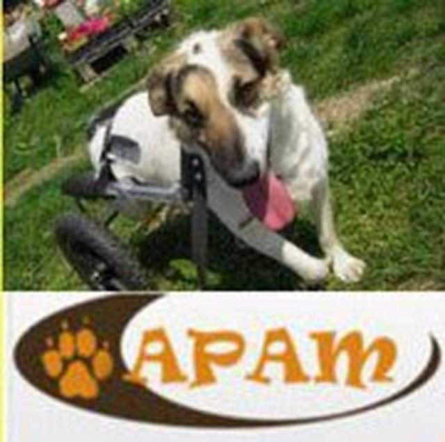 Please help APAM win ! only ONE vote - that's all !