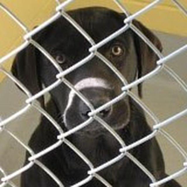 Help Stop Tulsa's Pet Overpopulation
