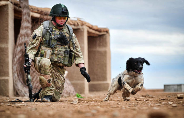 Pledge support for all animals lost in conflicts around the world