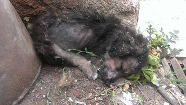 SIGN to help the abused animals in Macedonia!