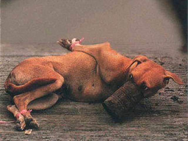 We can put an end to the wicked dog meat trade