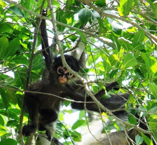 Salven la ultima selva conservada entre Cancún y Playa del Carmen