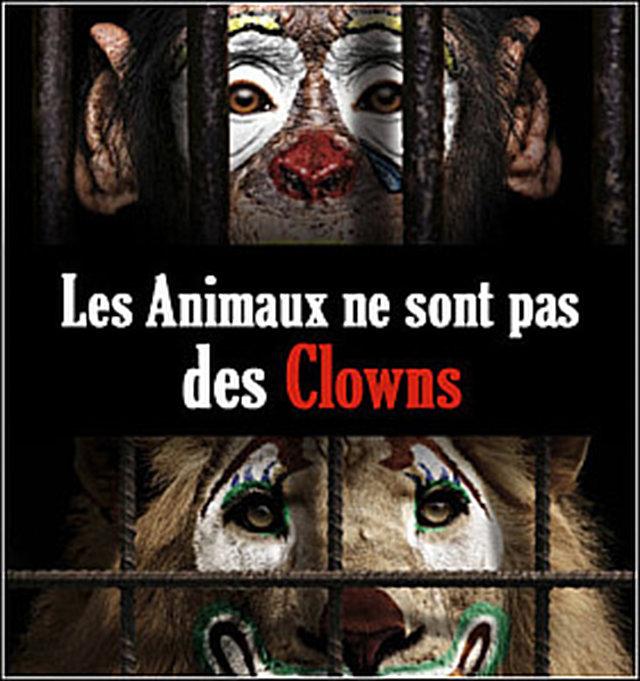 Interdiction de cirques avec animaux au Québec