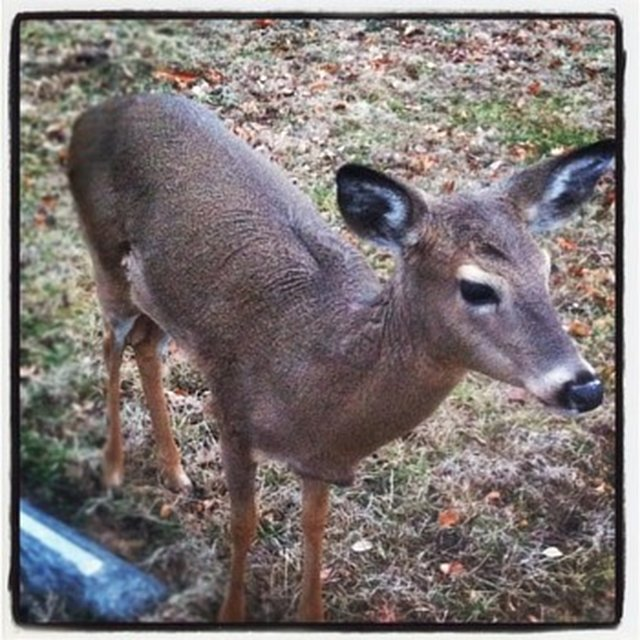 find who killed Ella the Deer from Elmwood Cemetery KCMO