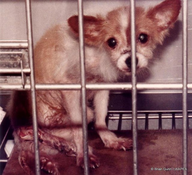 Let's end animal testing and vivisection