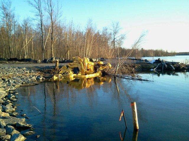 Stop Coles Creek from becoming a Wetlands Habitat!