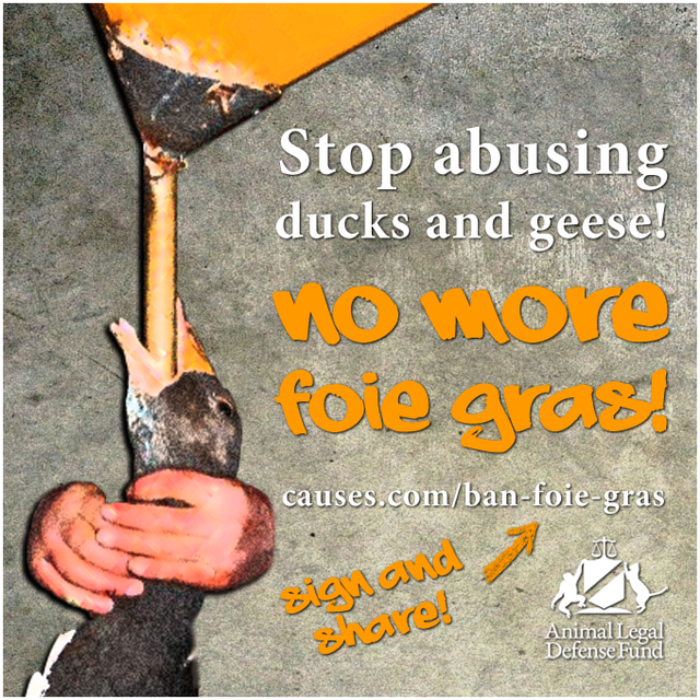 Stop Abusing Ducks and Geese - No more Foie Gras!