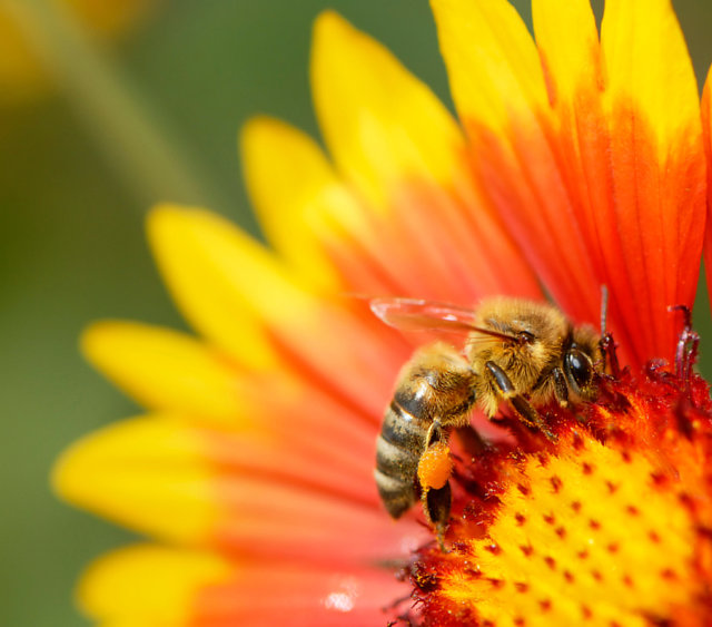 "Tell Lowe's to Drop Bee-Toxic ""Neonic"" Pesticides"