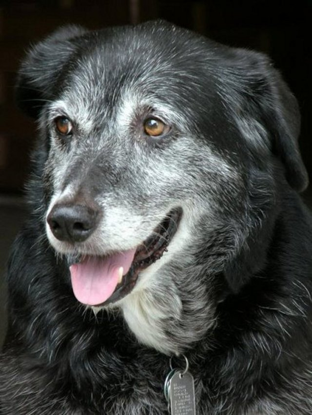 Please Pledge to Adopt a Senior Dog or Cat from a Shelter