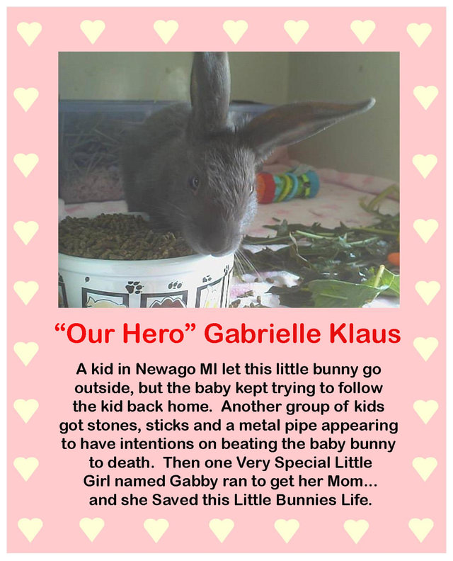 Thank Gabrielle Klaus for rescuing animals
