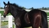 Support safe retirement for Thoroughbred racehorses; rehabilitation and retraining for new careers