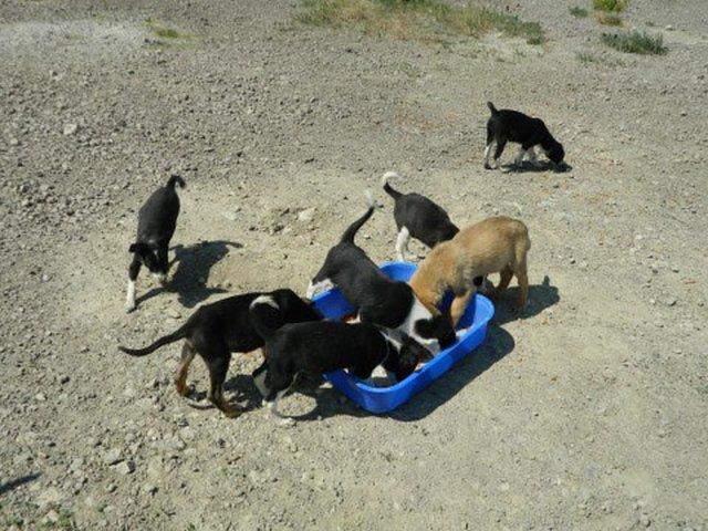 Hunder som trenger hjelp