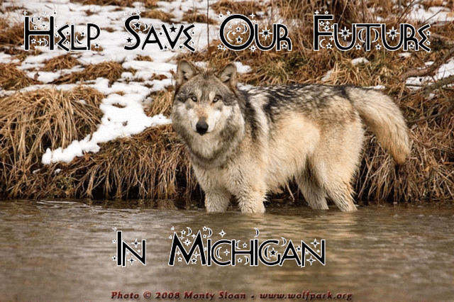 stop the slaughter of wolves in Michigan