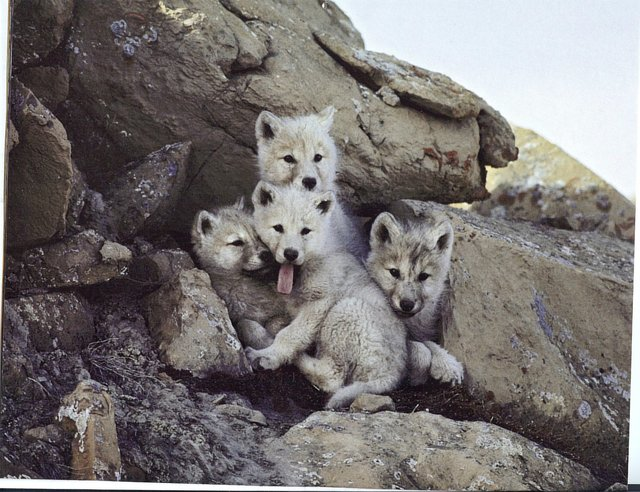 stop the deslisting of Wolves in 48 States