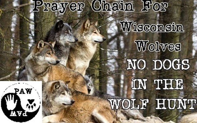 support Wisconsin's Wolves